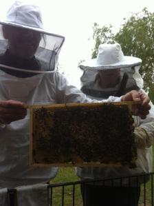 broedkamer met bijen
